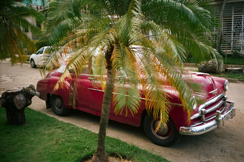 Shooting Real Film, Palm Tree and Taxi, Havana Cuba