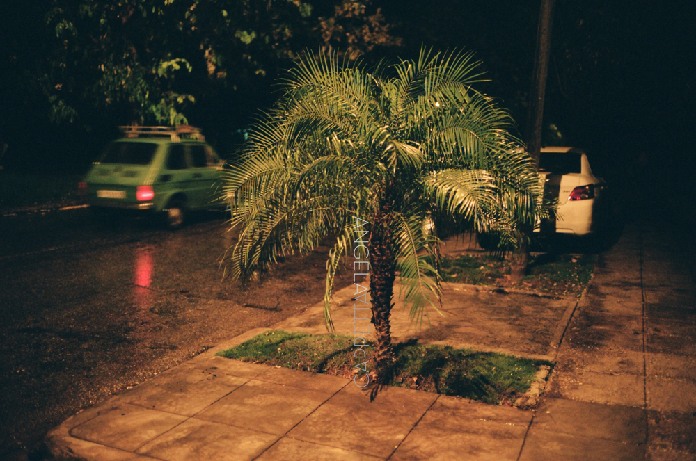 Shooting Real Film, Palm Tree in the Rain, Havana Cuba